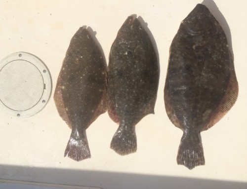 Gulf Flounder, thoughts on Southern Flounder and Management Options.